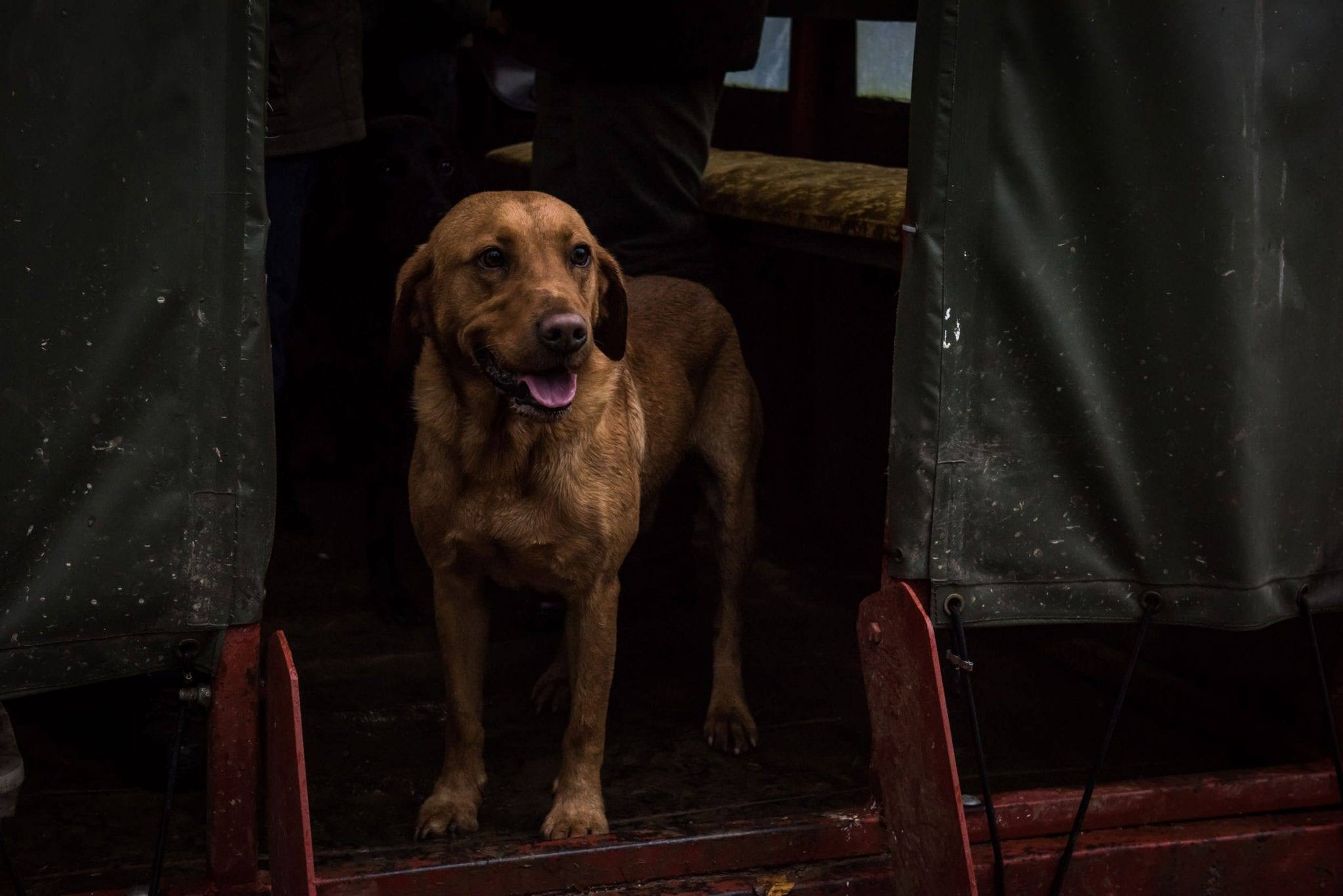 A Dog waiting for game during a shoot at Lady's Wood Shooting School
