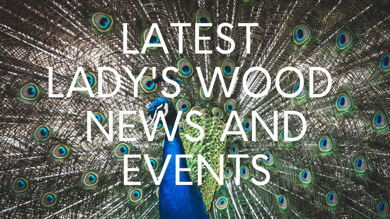Latest Lady's Wood News and Events