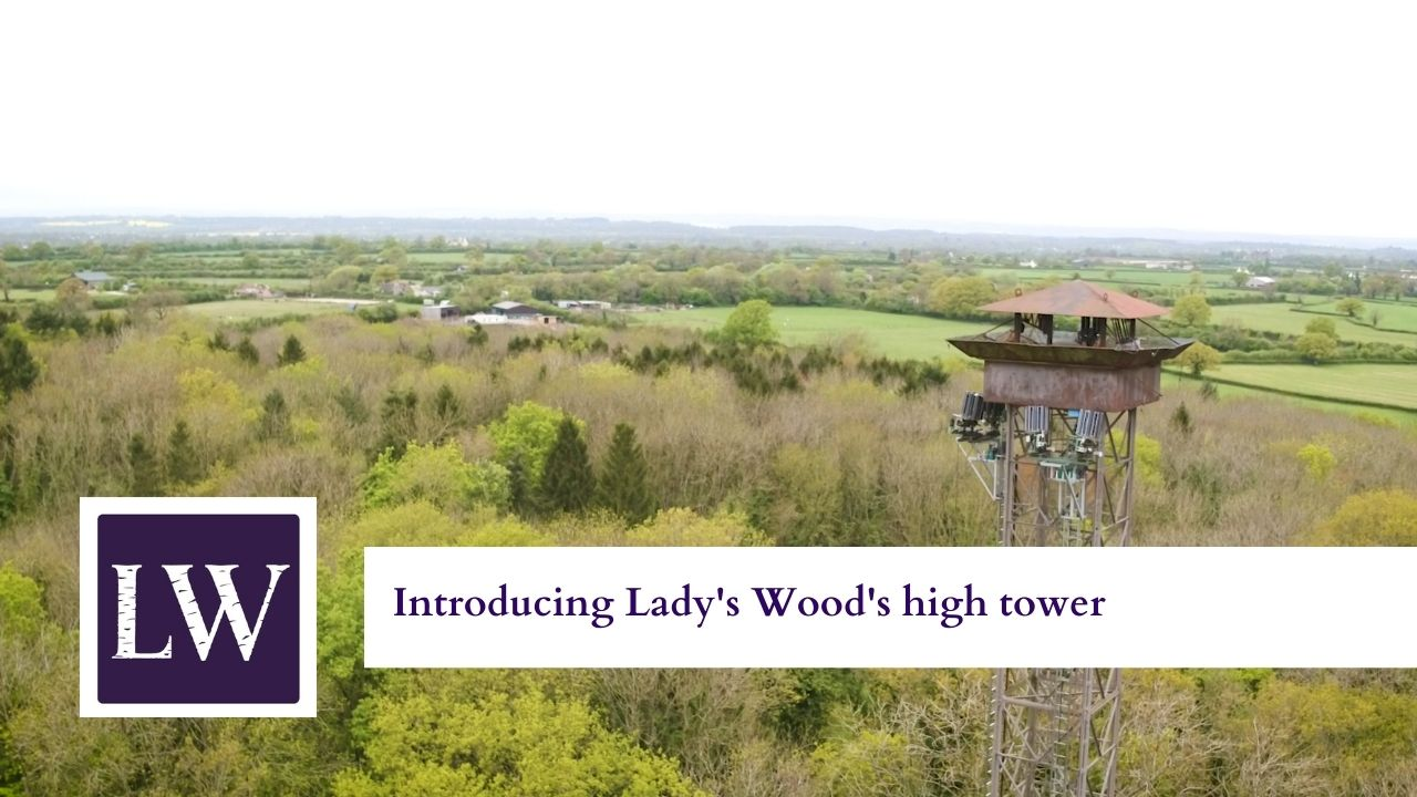 Latest video: Introducing Lady's Wood high tower